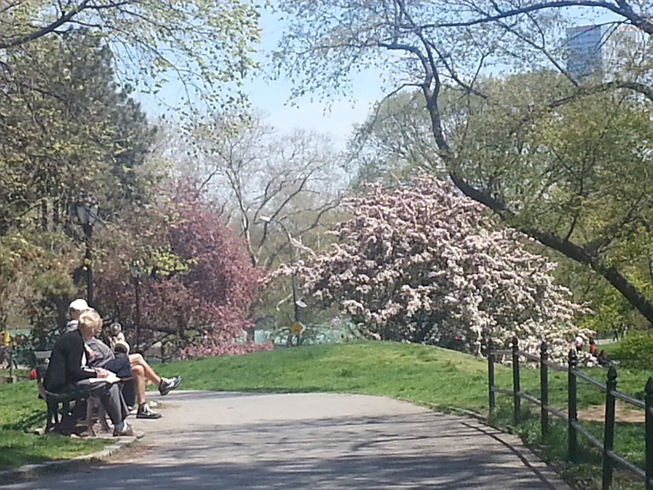 1-CPW-cherry-blossoms