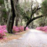 Savannah-live-oaks-and-azaleas