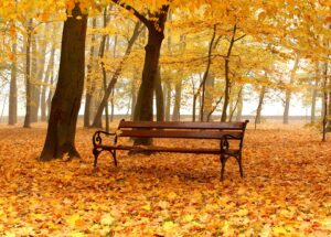 bench-Central-Park-autumn